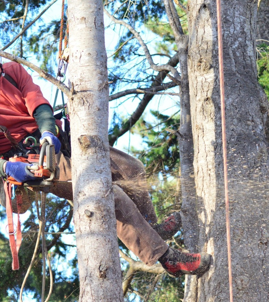 federal heights tree care